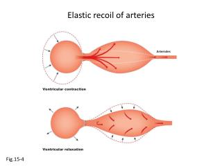 Elastic recoil of arteries