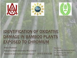 Identification of Oxidative Damage in Bamboo Plants exposed to Chromium