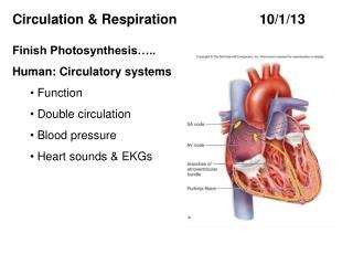 Circulation & Respiration  10/1 /13