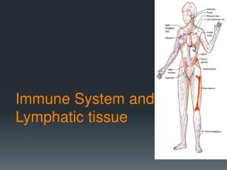 Immune System and Lymphatic tissue
