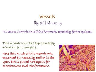 Vessels Digital  Laboratory