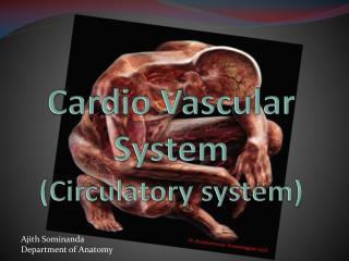 Cardio Vascular System (Circulatory system)