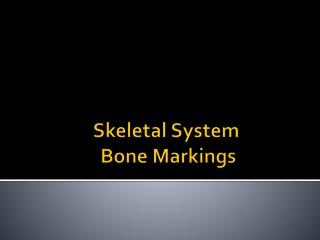 Skeletal System  Bone Markings