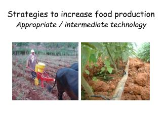 Strategies to increase food production Appropriate / intermediate technology