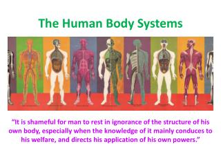 The Human Body Systems