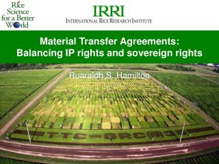 Material Transfer Agreements:  Balancing IP rights and sovereign rights Ruaraidh S. Hamilton