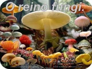 Característica dos fungos. :