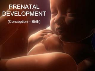 PRENATAL DEVELOPMENT (Conception – Birth)