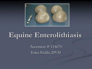 Equine Enterolithiasis