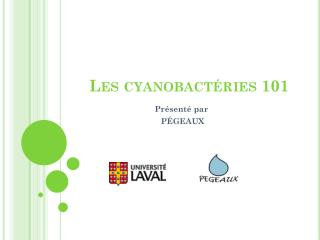 Les  cyanobactéries  101