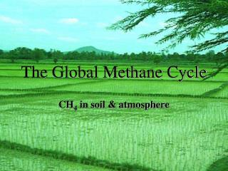 The Global Methane Cycle