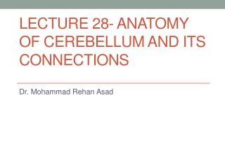 LECTURE 28- ANATOMY OF CEREBELLUM AND ITS CONNECTIONS
