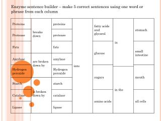 Enzyme sentence builder – make 5 correct sentences using one word or phrase from each column