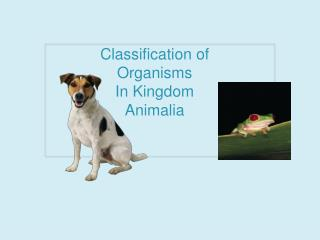 Classification of  Organisms In Kingdom  Animalia