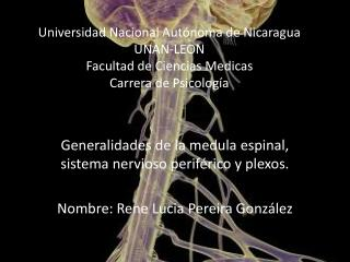 Generalidades de la medula espinal, sistema nervioso periférico y plexos.