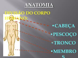 ANATOMIA DIVISÃO DO CORPO HUMANO: