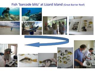 Fish 'barcode blitz' at Lizard Island  (Great Barrier Reef)