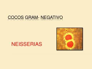 COCOS GRAM- NEGATIVO