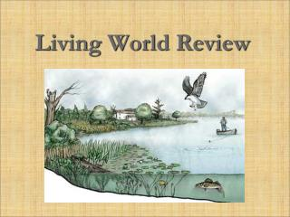Living World Review