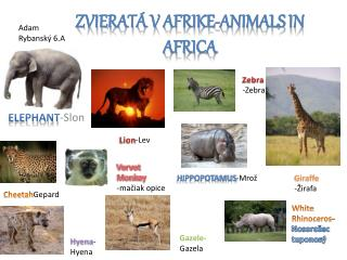 Zvierat�  v  Afrike-Animals  in  Africa