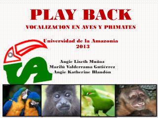 PLAY BACK VOCALIZACION EN AVES Y  PRIMATES Universidad de la Amazonia