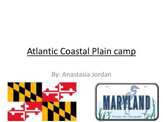 Atlantic Coastal  P lain camp