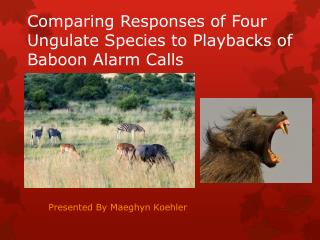 Comparing Responses of Four Ungulate Species to Playbacks of Baboon Alarm Calls