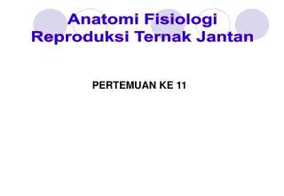 Anatomi  Fisiologi Reproduksi  Ternak Jantan