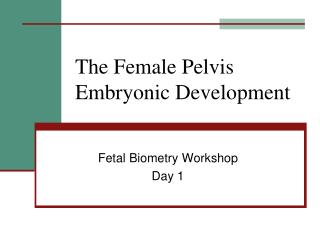 The Female Pelvis Embryonic Development