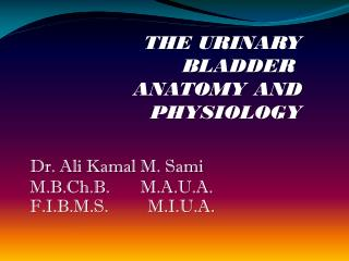 THE URINARY BLADDER  ANATOMY AND PHYSIOLOGY