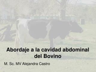 Abordaje a la cavidad abdominal del  Bovino M. Sc. MV Alejandra Castro