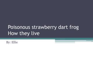 Poisonous strawberry dart frog How they live