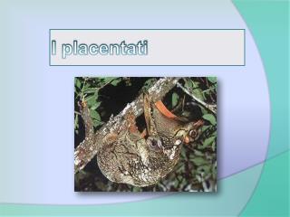 I placentati