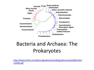 B acteria and  Archaea :  T he Prokaryotes