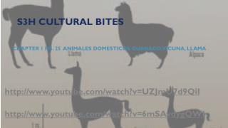 S3H Cultural Bites