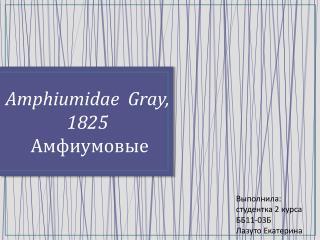 Amphiumidae   Gray,  1825 Амфиумовые