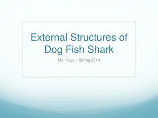 External Structures of Dog Fish Shark