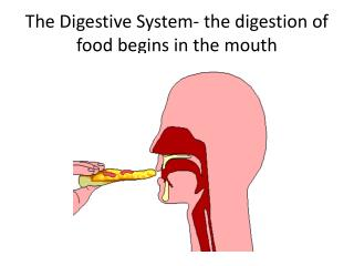 The Digestive System- the digestion of food begins in the mouth