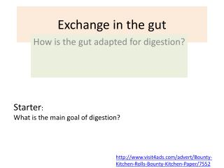 Exchange in the gut