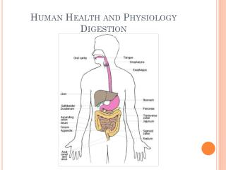 Human Health and Physiology Digestion