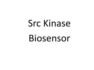 Src Kinase       Biosensor