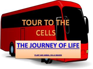 THE JOURNEY OF LIFE PLANT AND ANIMAL CELLS IMAGES