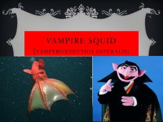 Vampire Squid ( Vampyro n teuthis Inferalis )