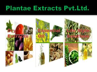 Plantae  Extracts  Pvt.Ltd .