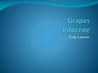 Grapes Vitaceae