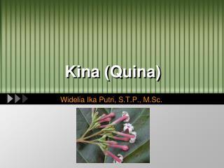 Kina (Quina)