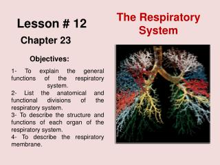 Lesson #  12