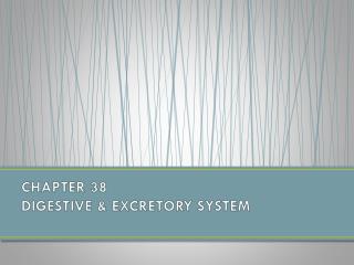 CHAPTER 38  DIGESTIVE & EXCRETORY SYSTEM