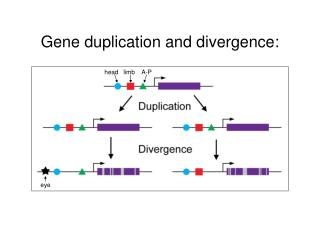 Gene duplication and divergence: