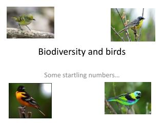 Biodiversity and birds